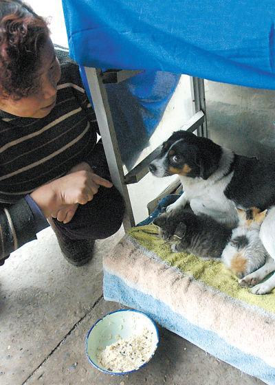 狗奶妈主动上门照顾 - johnie - johnie在这里学习工作生活!